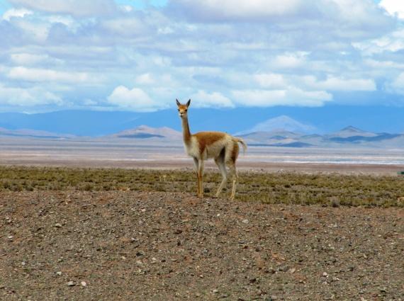 terres de andes argentine